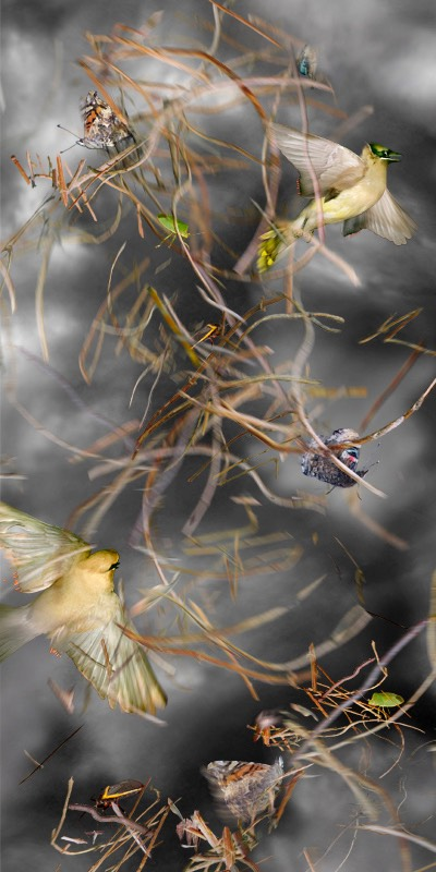 '12 SCROLL BirdTwigs #5 WEB size
