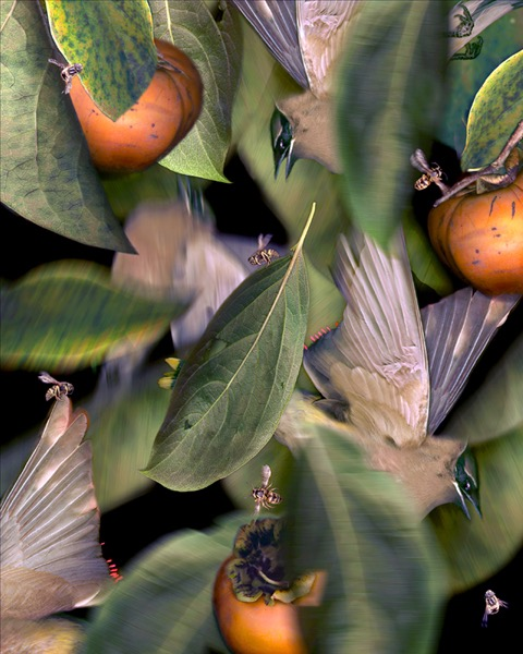 Wax Wings & Persimmons